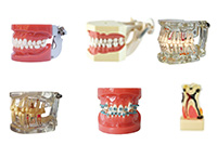Teeth and Study Models
